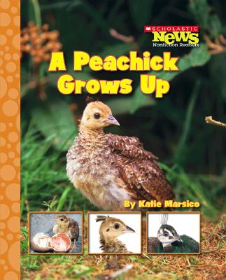 A Peachick Grows Up By Marsico, Katie